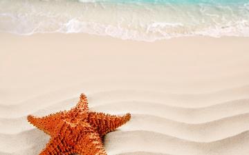 обоя животные, морские звёзды, песок, море, берег, морская, звезда