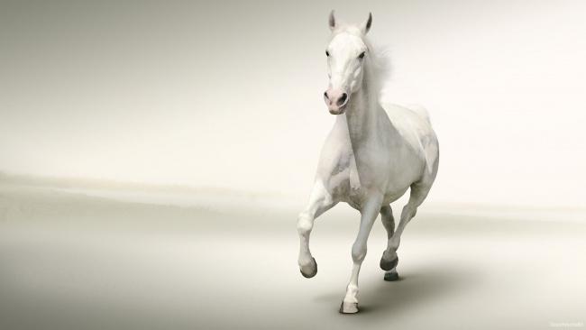 Обои картинки фото животные, лошади, лошадь, конь, белый, галоп