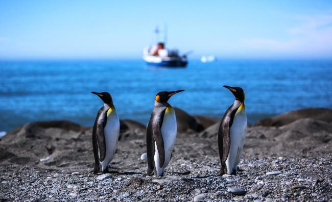 Обои картинки фото животные, пингвины, камни, корабль, море, берег