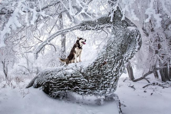 Обои картинки фото животные, собаки, зима, лес, взгляд, собака
