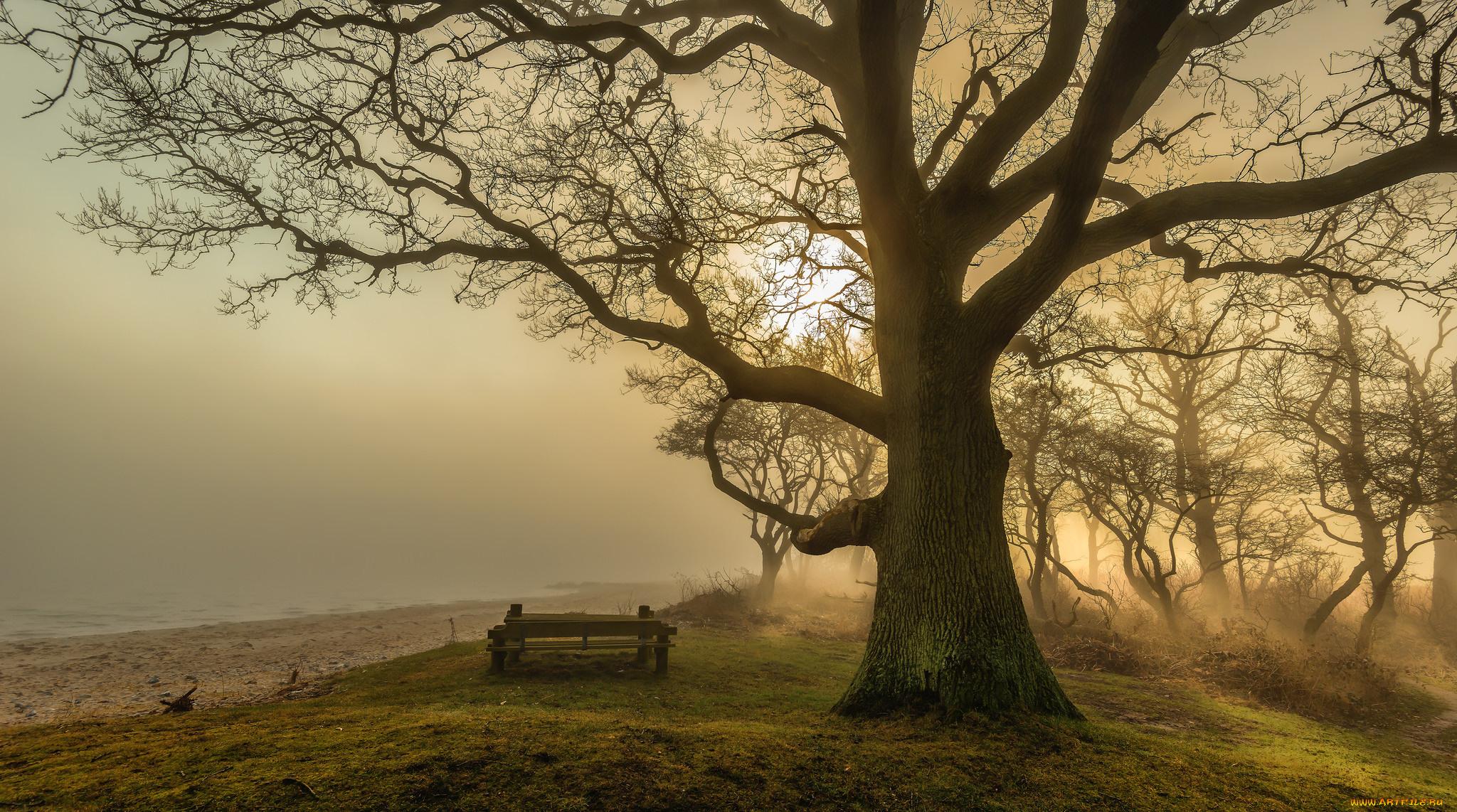 дерево скамейка закат трава бесплатно