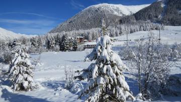 Картинка природа зима снег ели сугробы