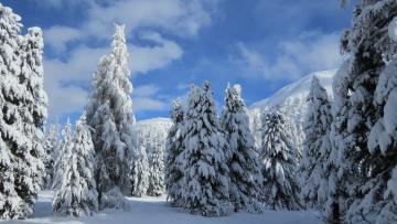 Ели в снегу снег зима  № 2793537 загрузить