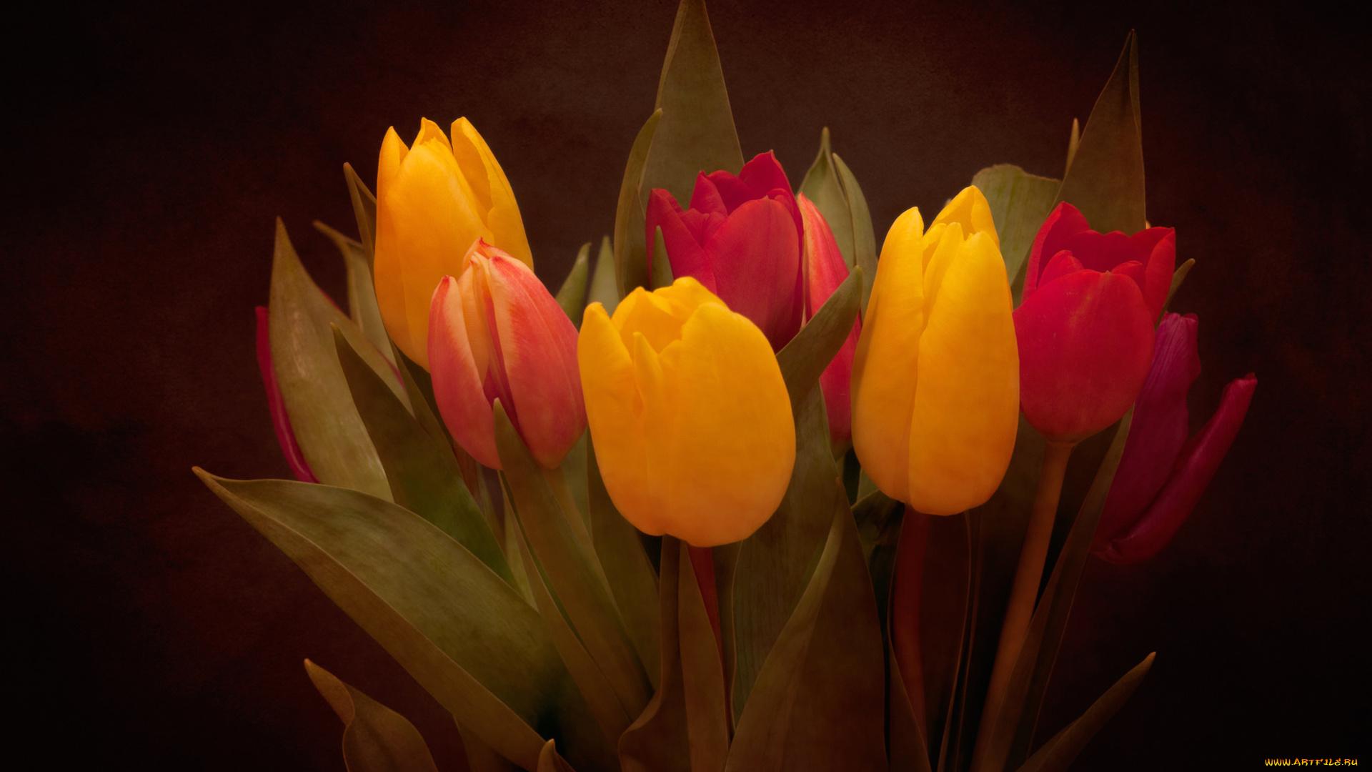 букет,тюльпаны,листья  № 415758 загрузить