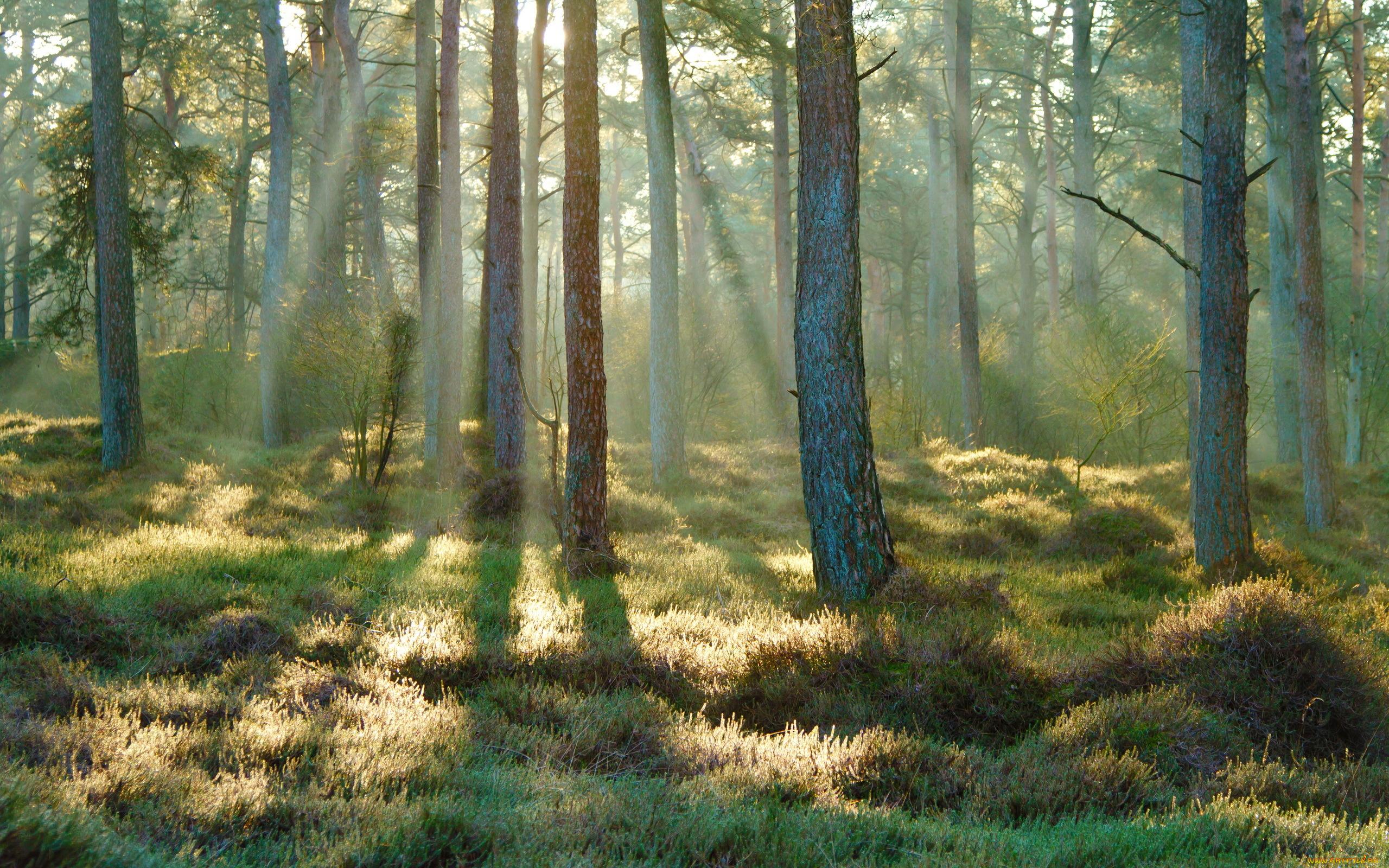 весной в лесу  № 113897 загрузить