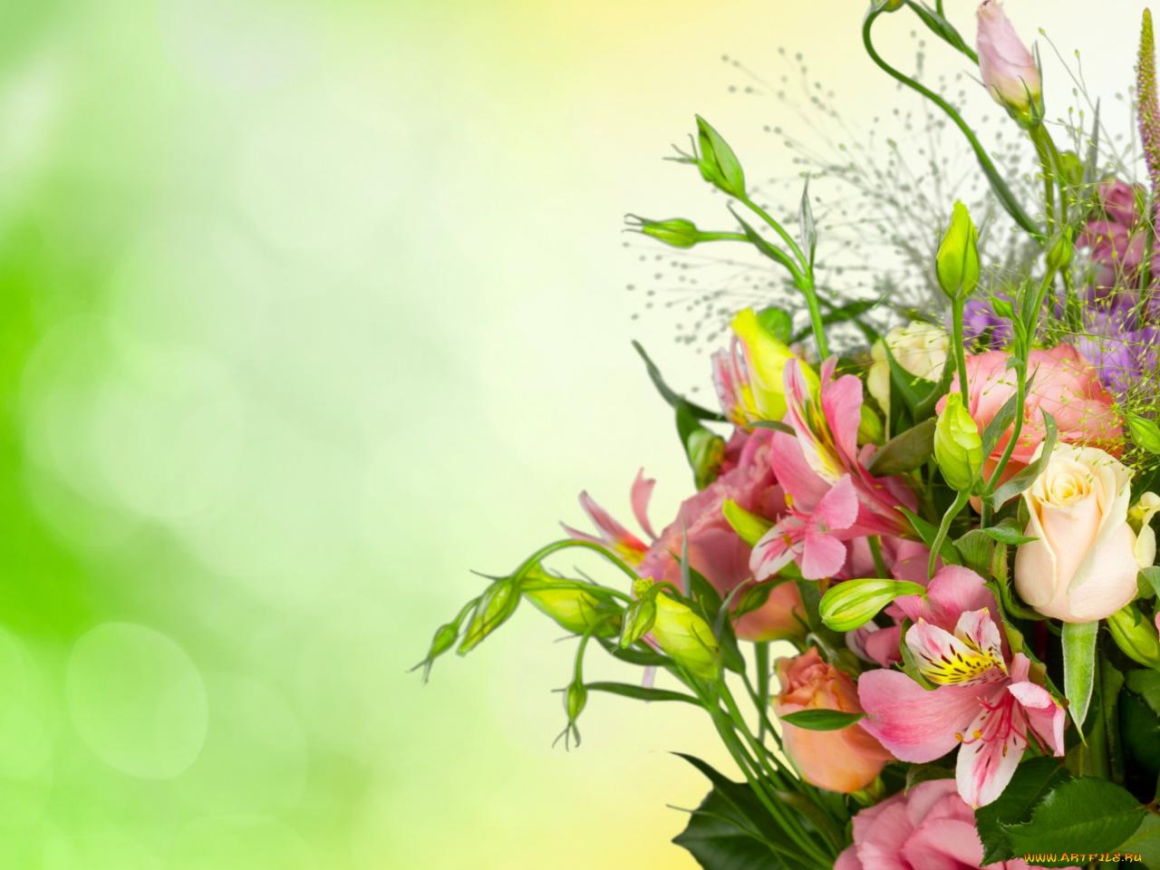 Фон для поздравления цветы, телефон 240 320