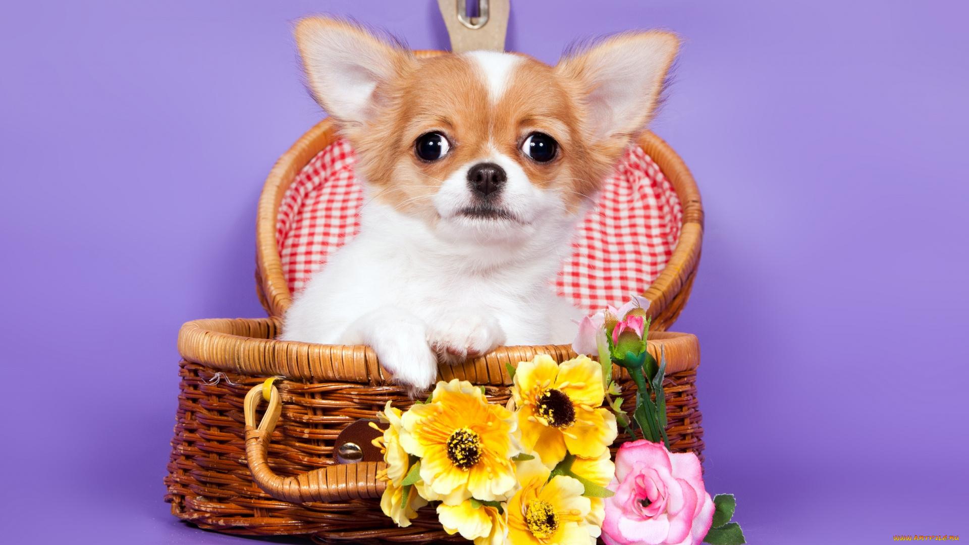 Июля, открытки с маленькими собаками