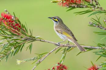 Картинка животные птицы птица ветвь листья ветка
