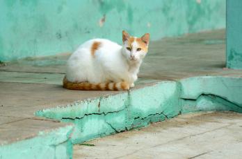 обоя животные, коты, кошка, фон, взгляд