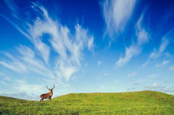 обоя животные, олени, олень, холмы, небо, поле