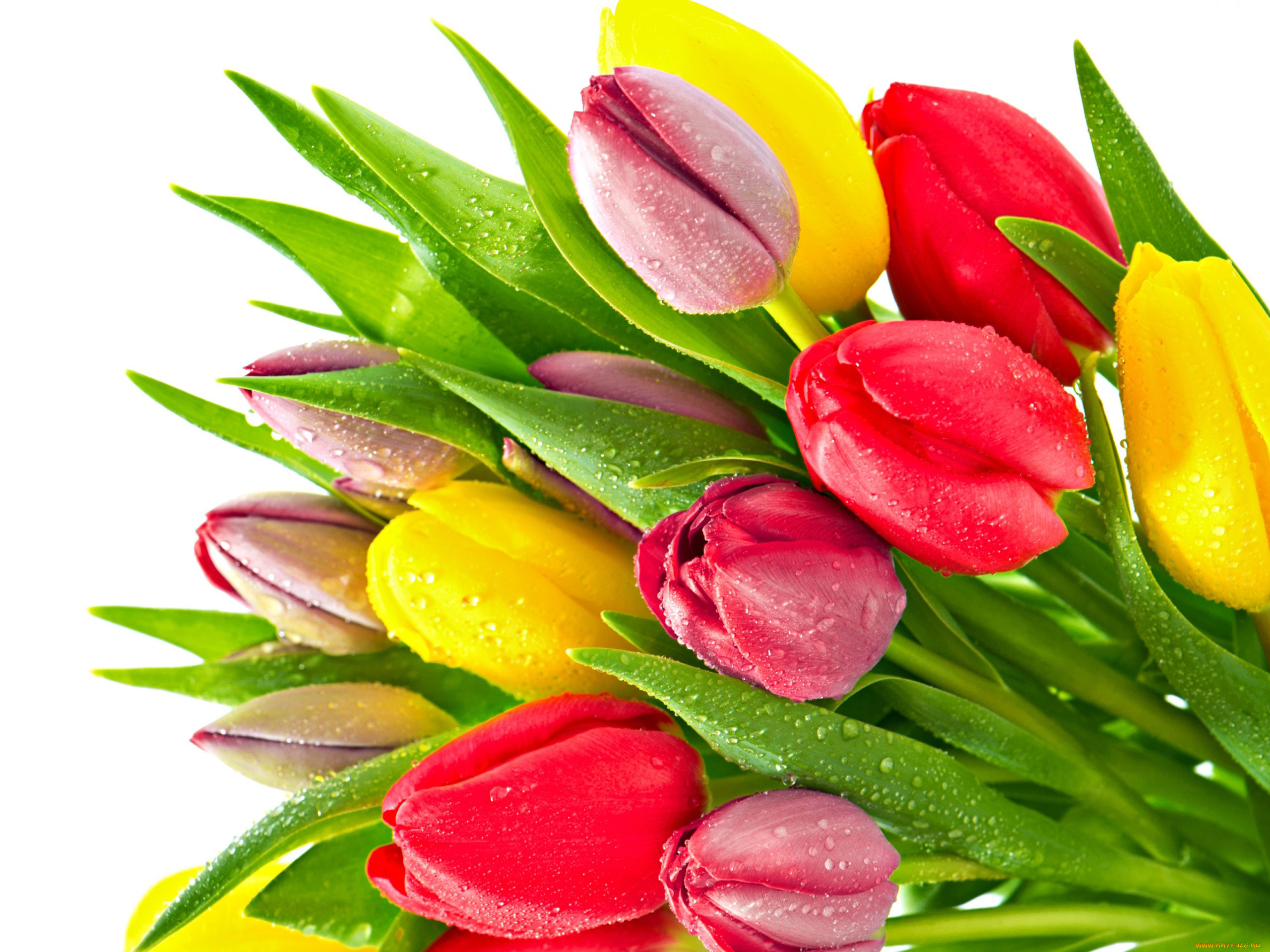 Открытки цветами тюльпаны, днем рождения