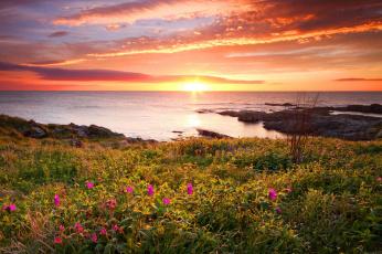 Картинка природа моря океаны цветы закат море