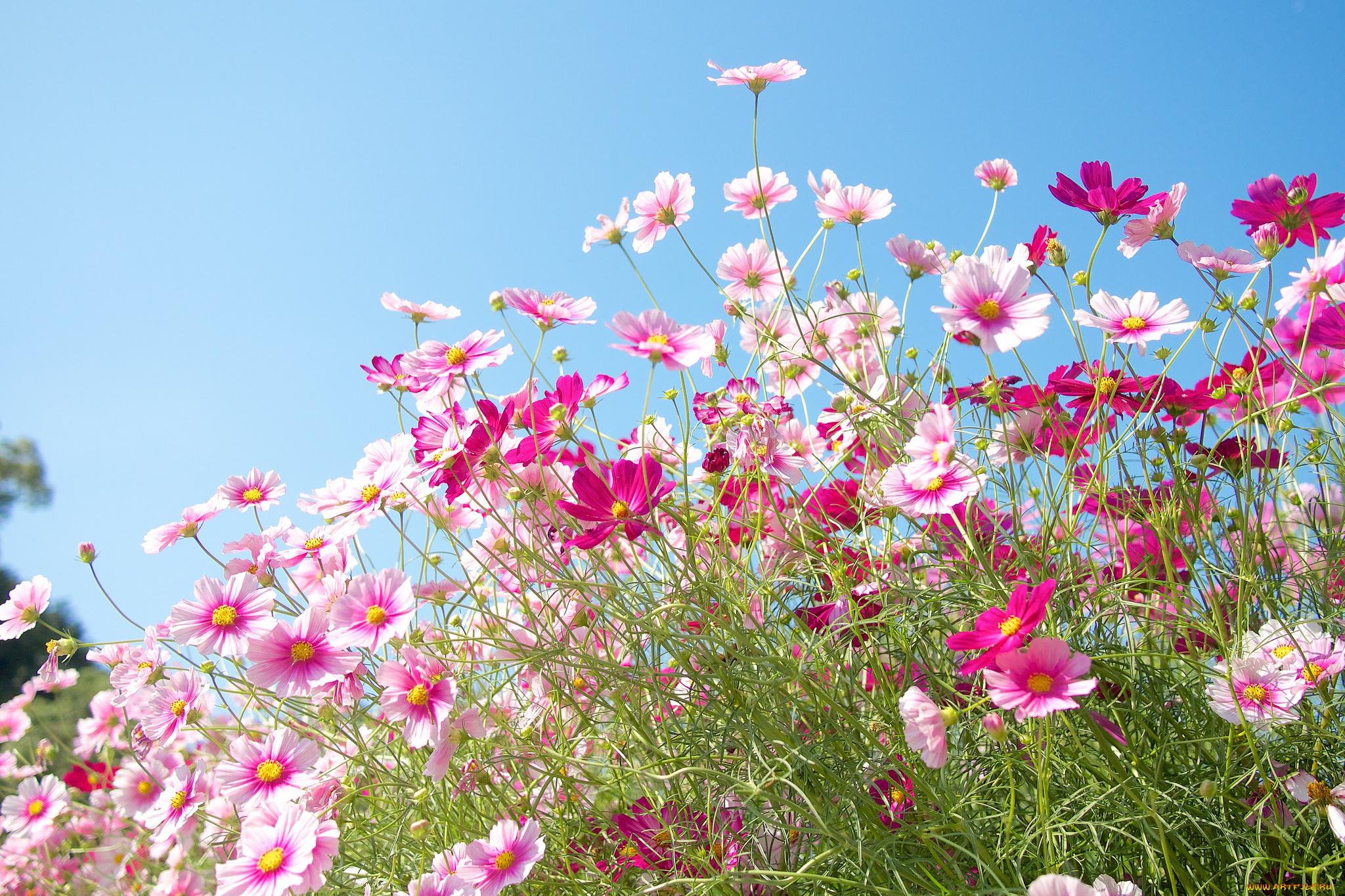 Открытка луговые цветы