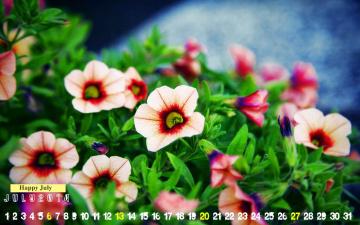 обоя календари, цветы, калибрахоа