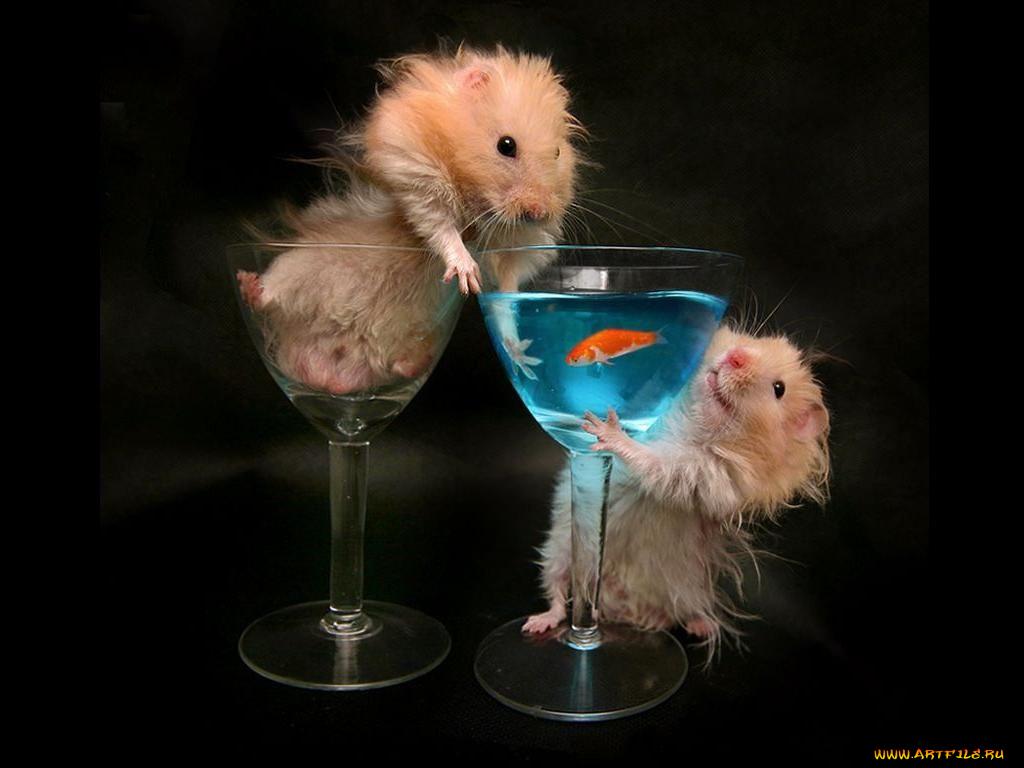 Марину днем, картинки про мартини прикольные