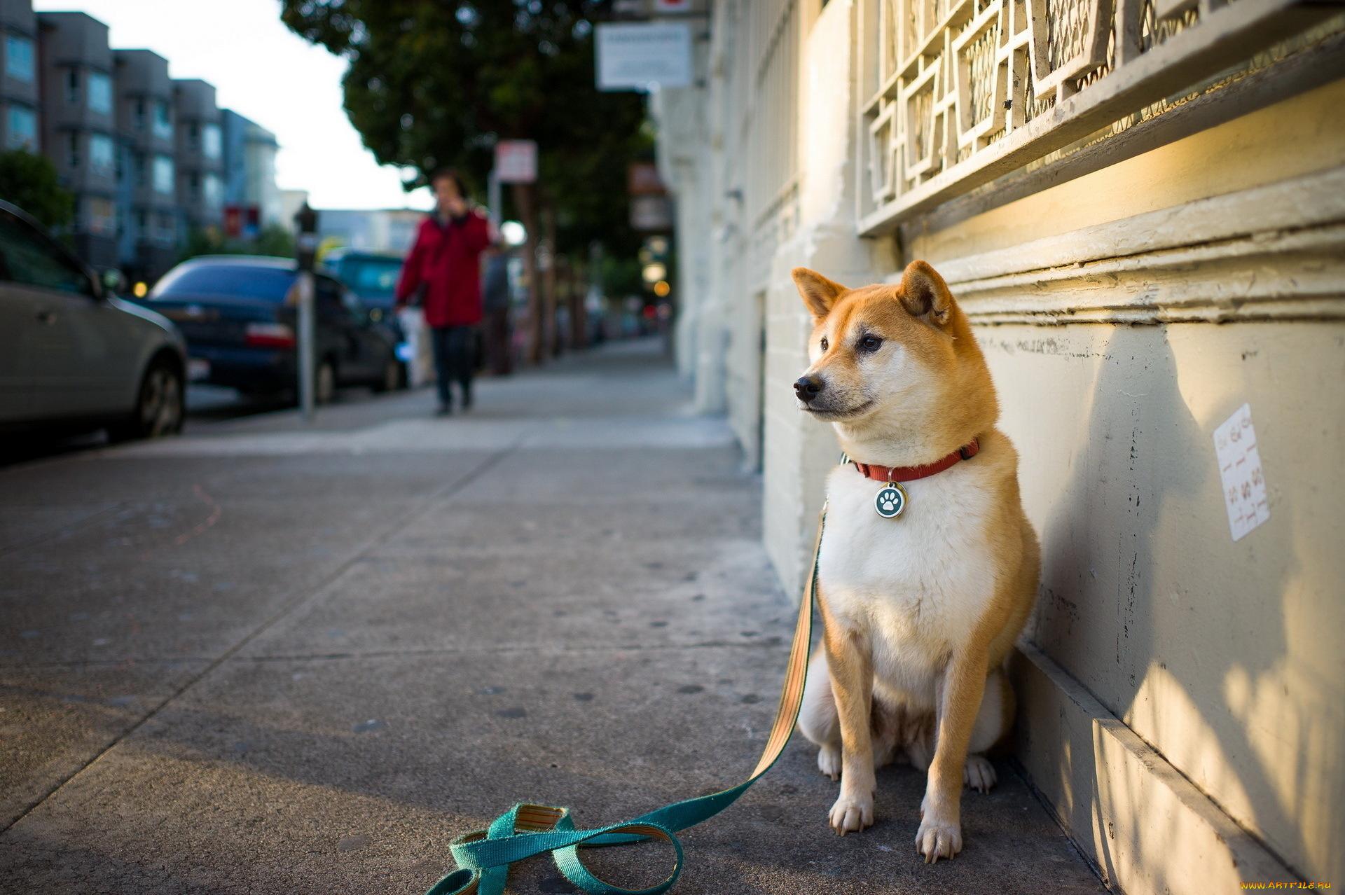 Картинки уличные животные