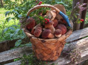 Подосиновики с ягодами в ведре без смс