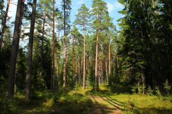 Картинка комарово санкт петербург природа лес тропинка