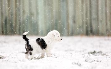 Картинка животные собаки снег фон щенок