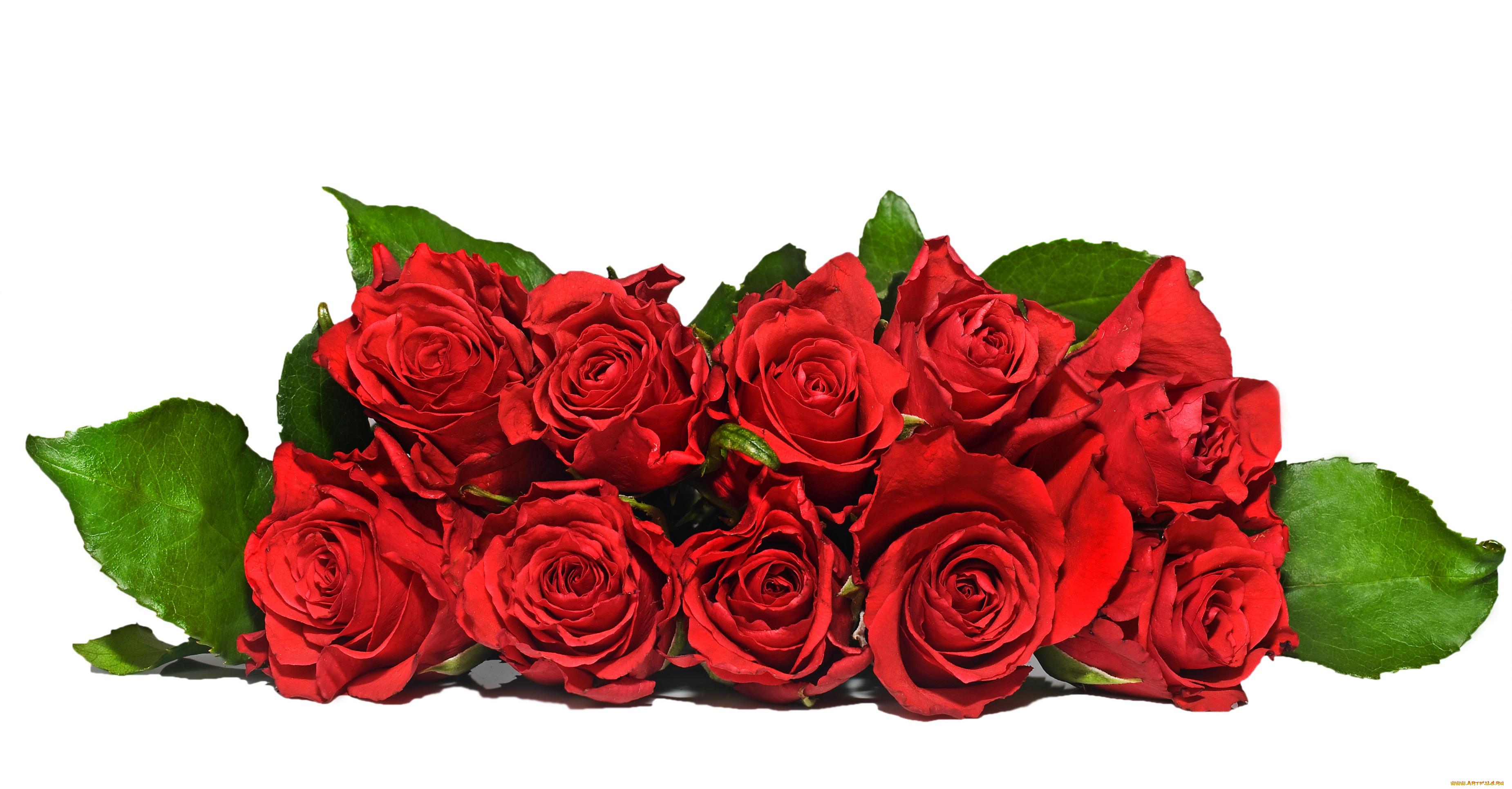 Летием татьяна, розы красные для открытки