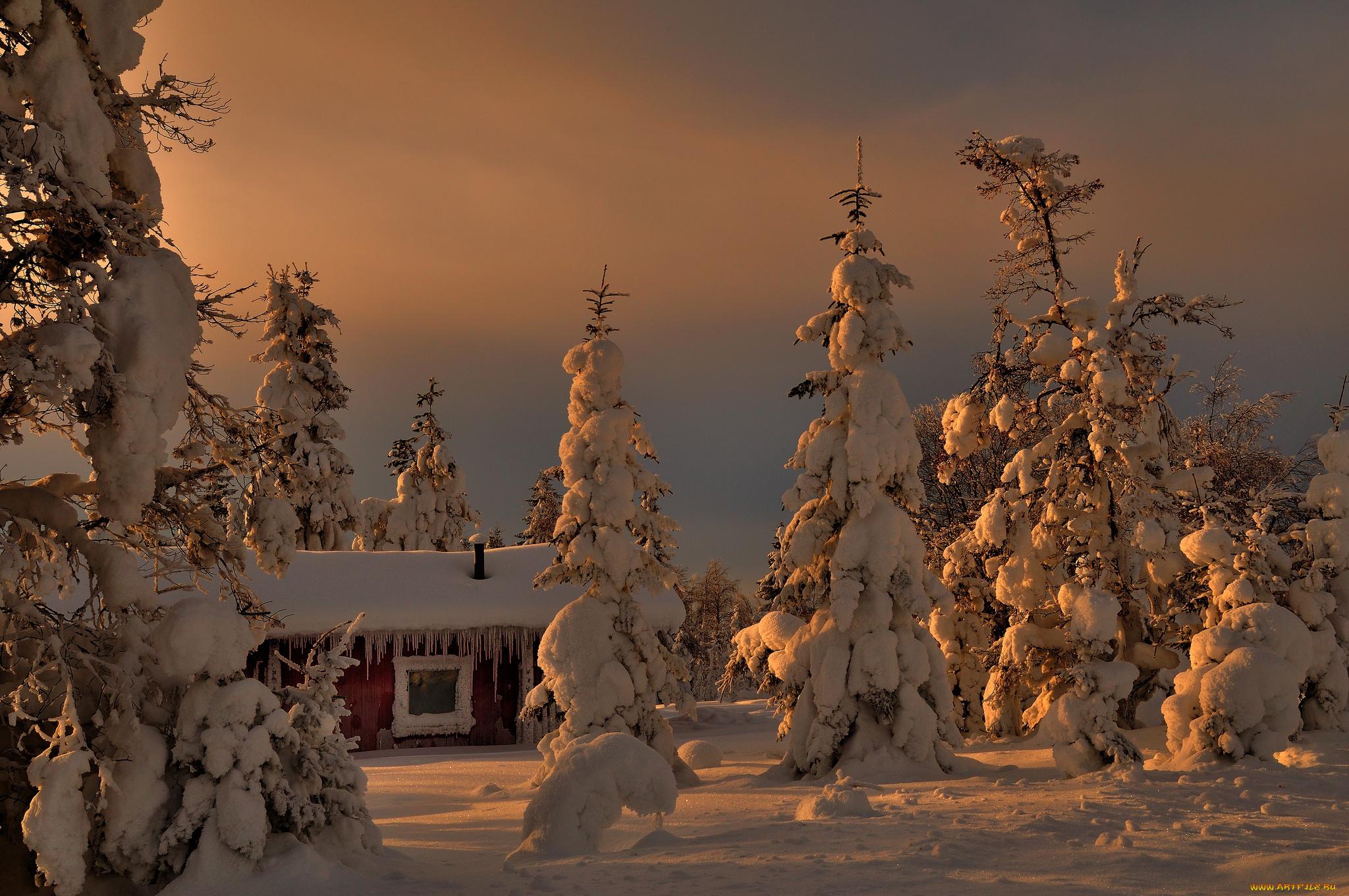 возьмёте фото новогодней ночи в природе вас друзьях
