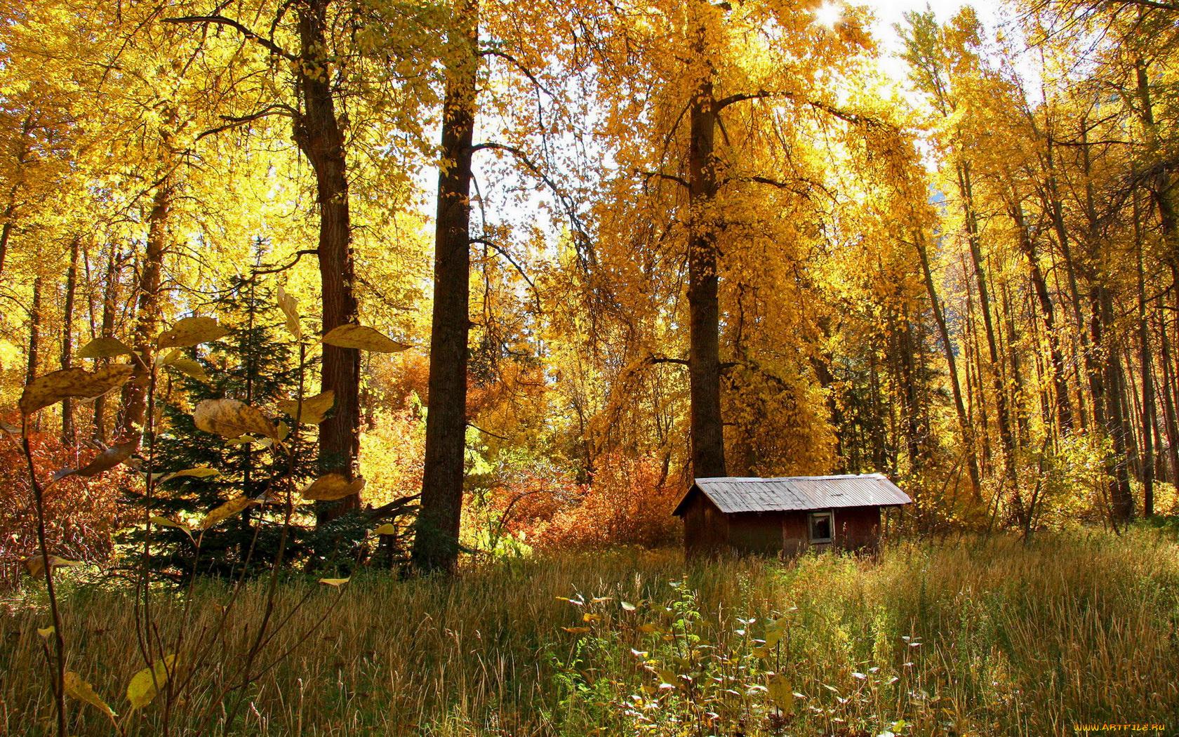 картинки лес природа осень деревня главное, что любительская