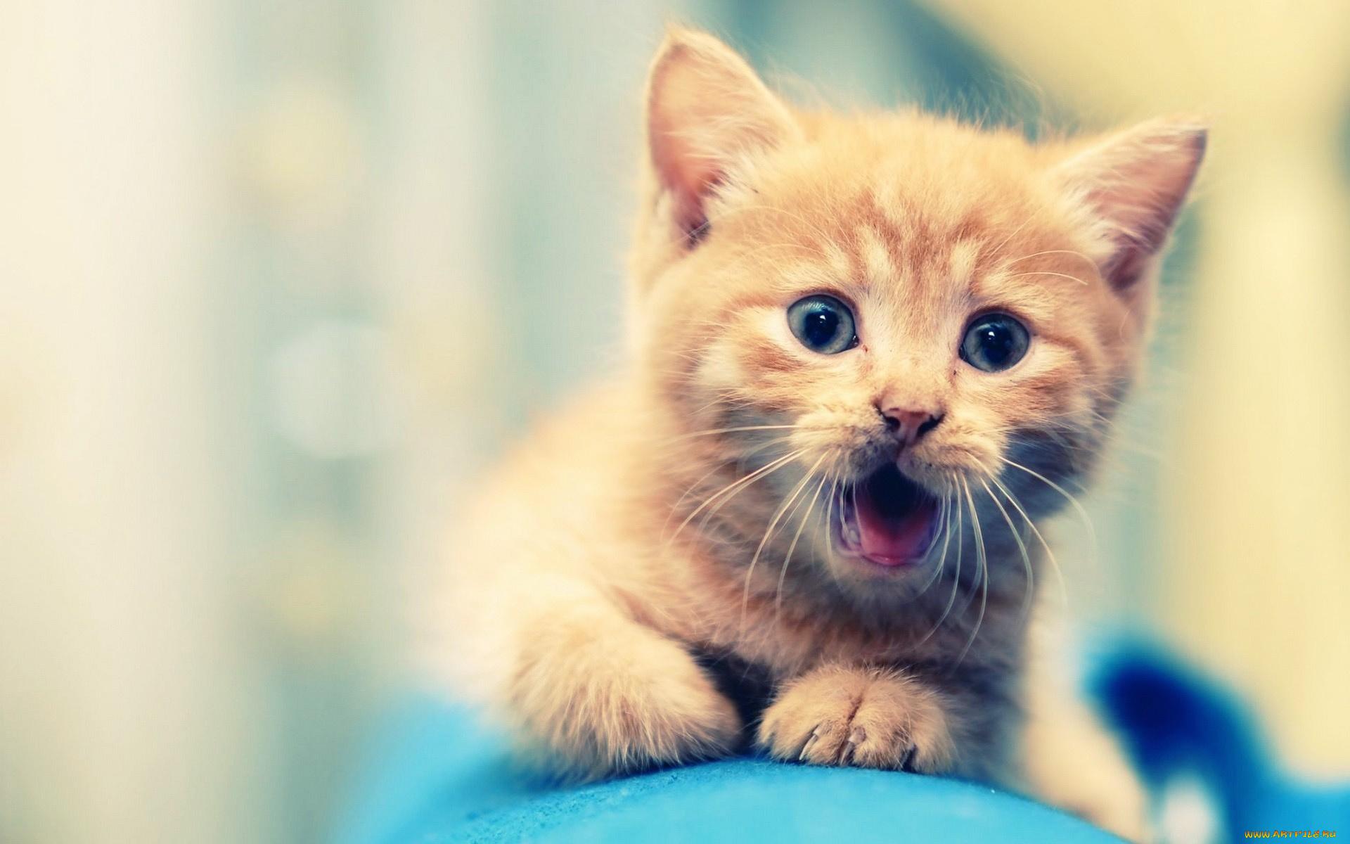 Удивленные котенки  № 1097860 без смс