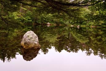 Картинка природа реки озера лес озеро