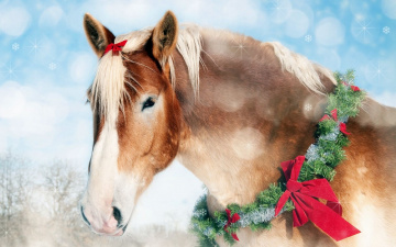 Картинка животные лошади венок