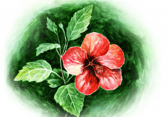 Картинка рисованные цветы flower red watercolors hibiscus