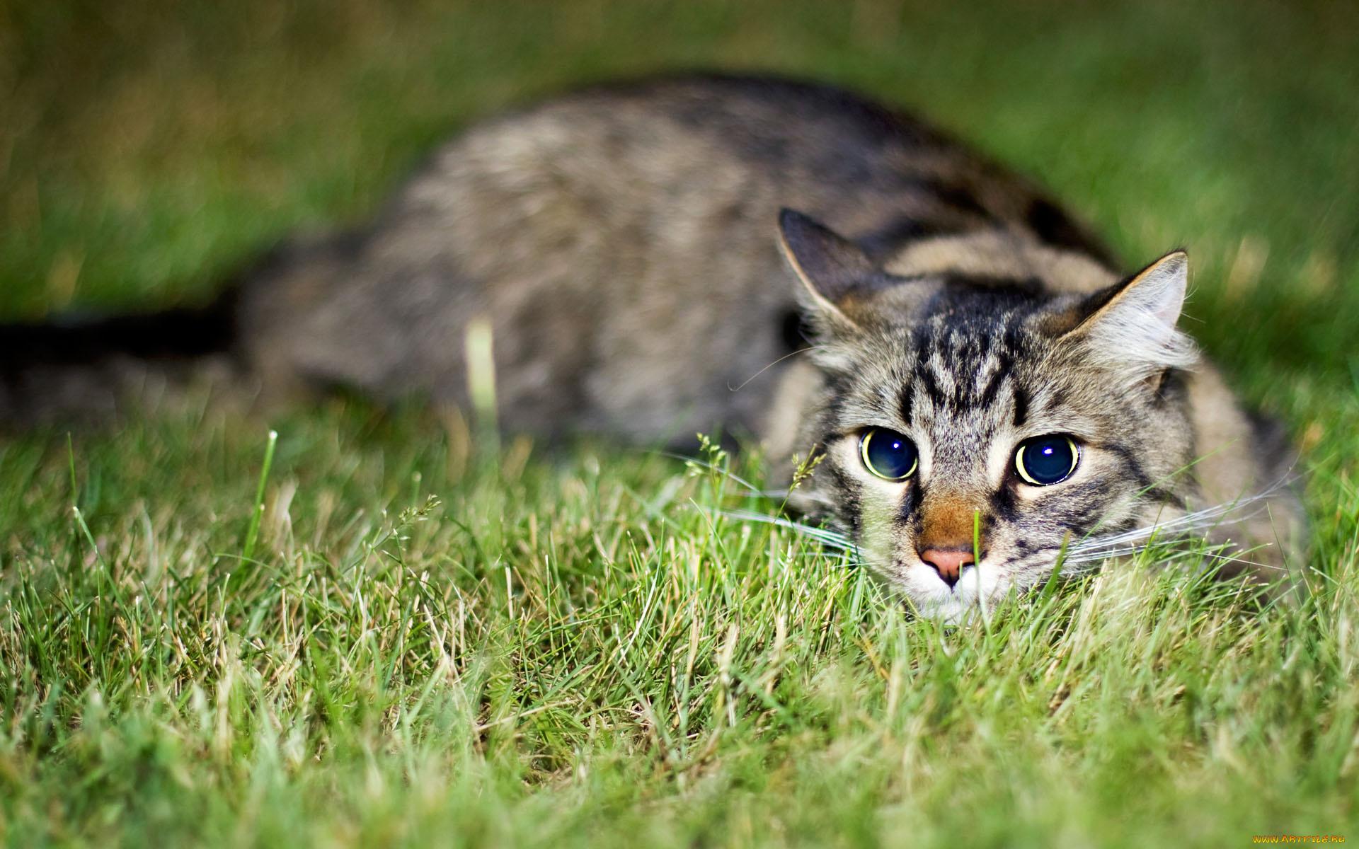 Котенок играющий с кошкой в траве  № 1995004 бесплатно