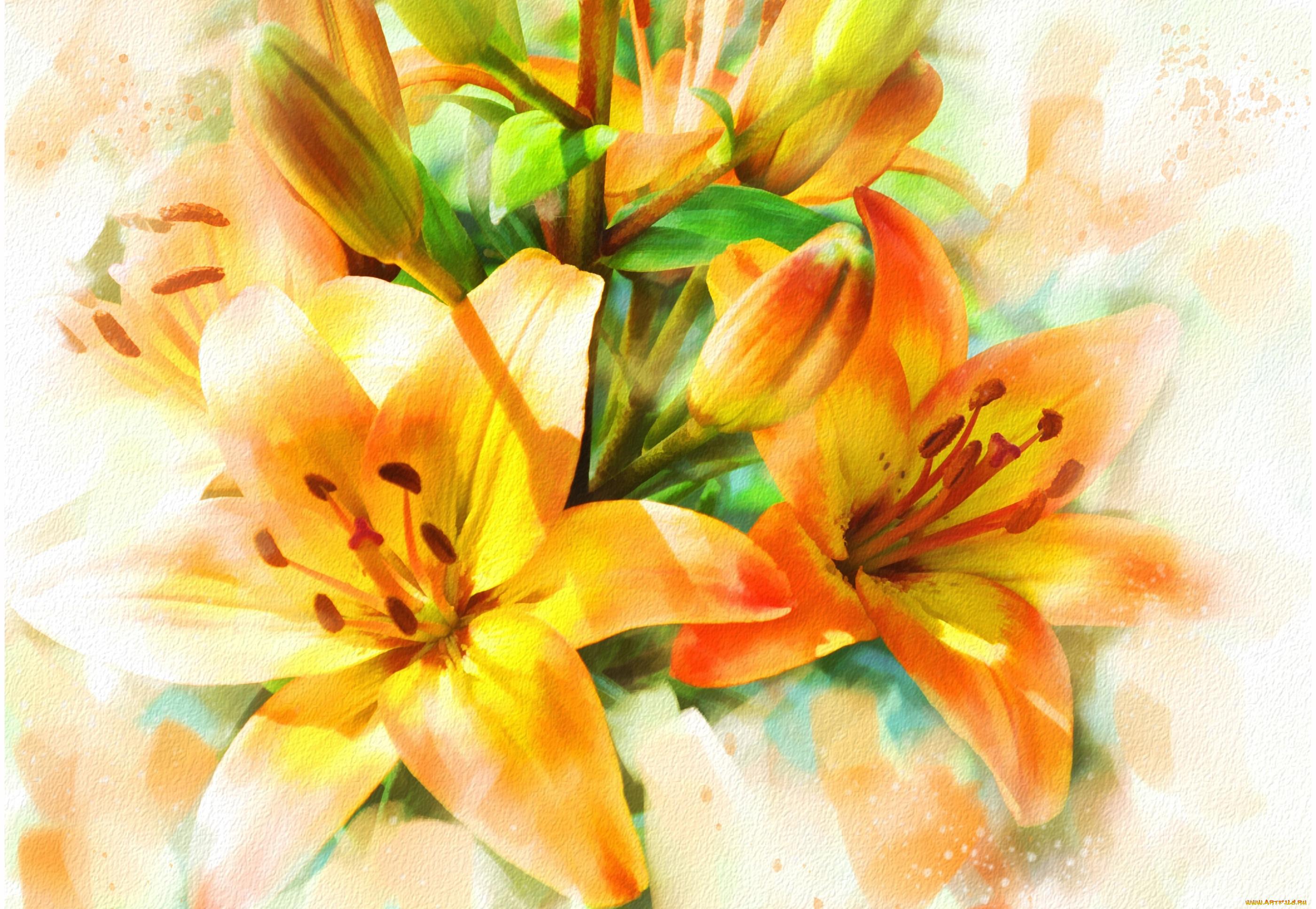 Красивые рисованные открытки цветы похожие на лилии с днем учителя, днем рождения
