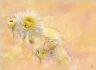 Картинка рисованные цветы георгины