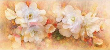 Картинка рисованные цветы бегония