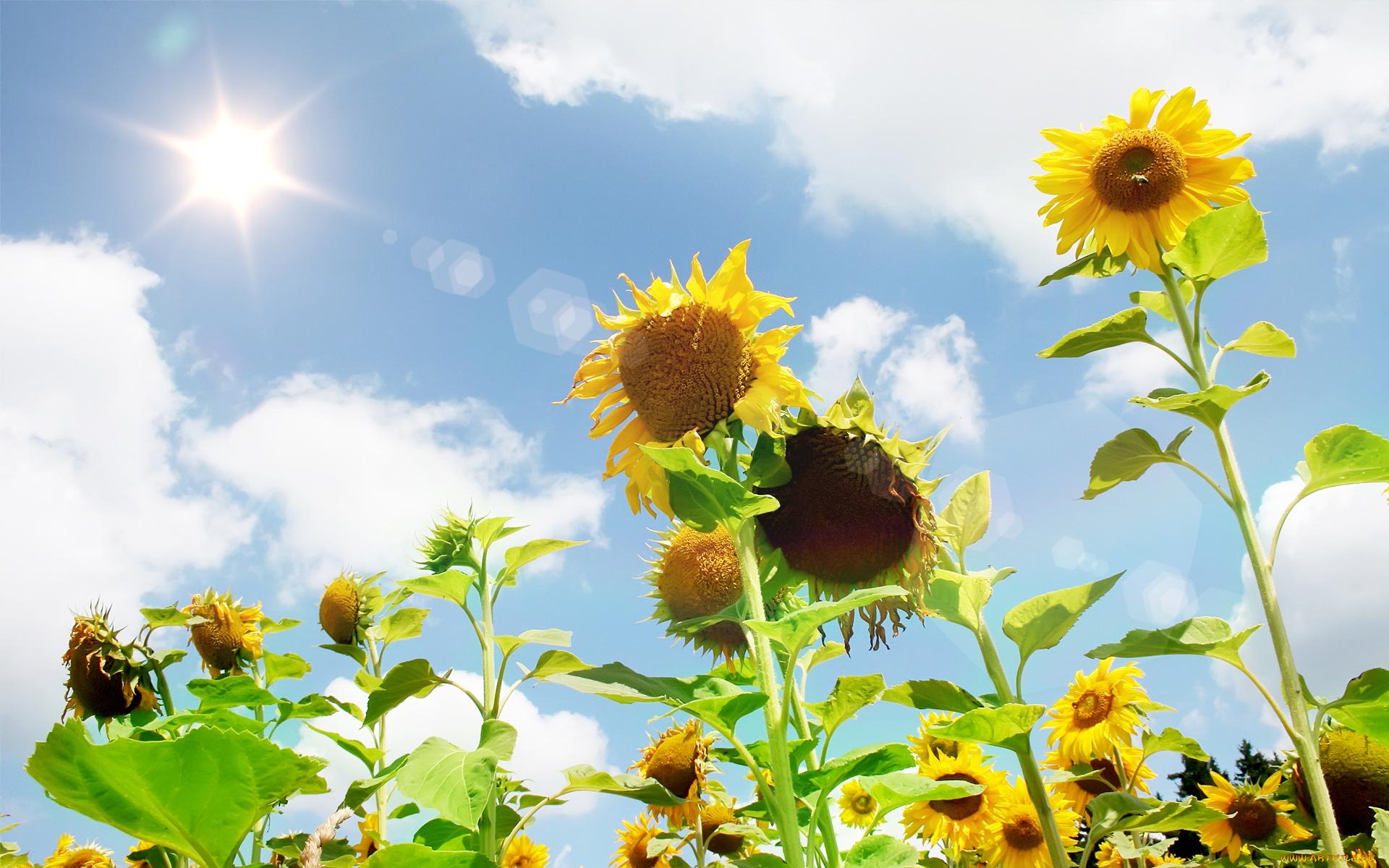 Картинки бобра, картинки доброе утро рассвет лето цветы