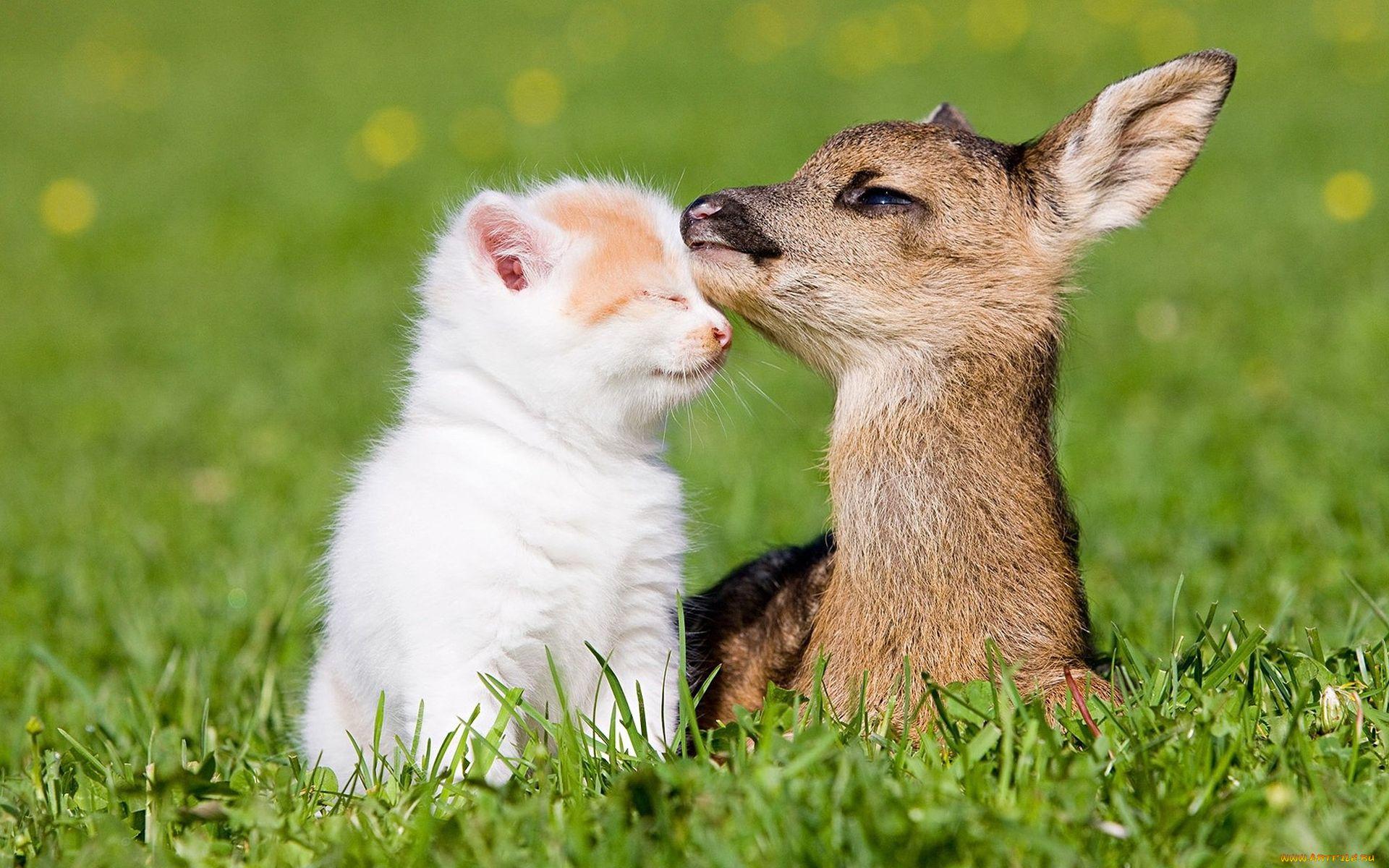 Открытки дружба животных