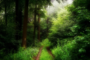 Картинка природа дороги деревья лес весна