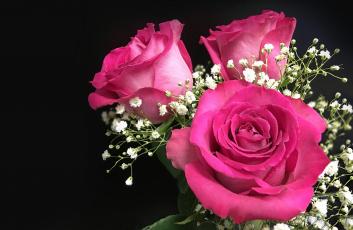 обоя цветы, розы, гипсофила, букет, бутоны