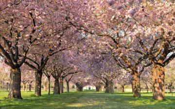 обоя цветы, цветущие деревья ,  кустарники, сад