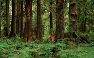 Картинка природа лес