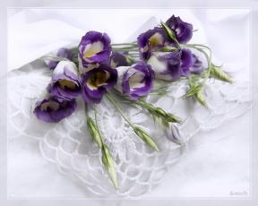 Картинка цветы эустома