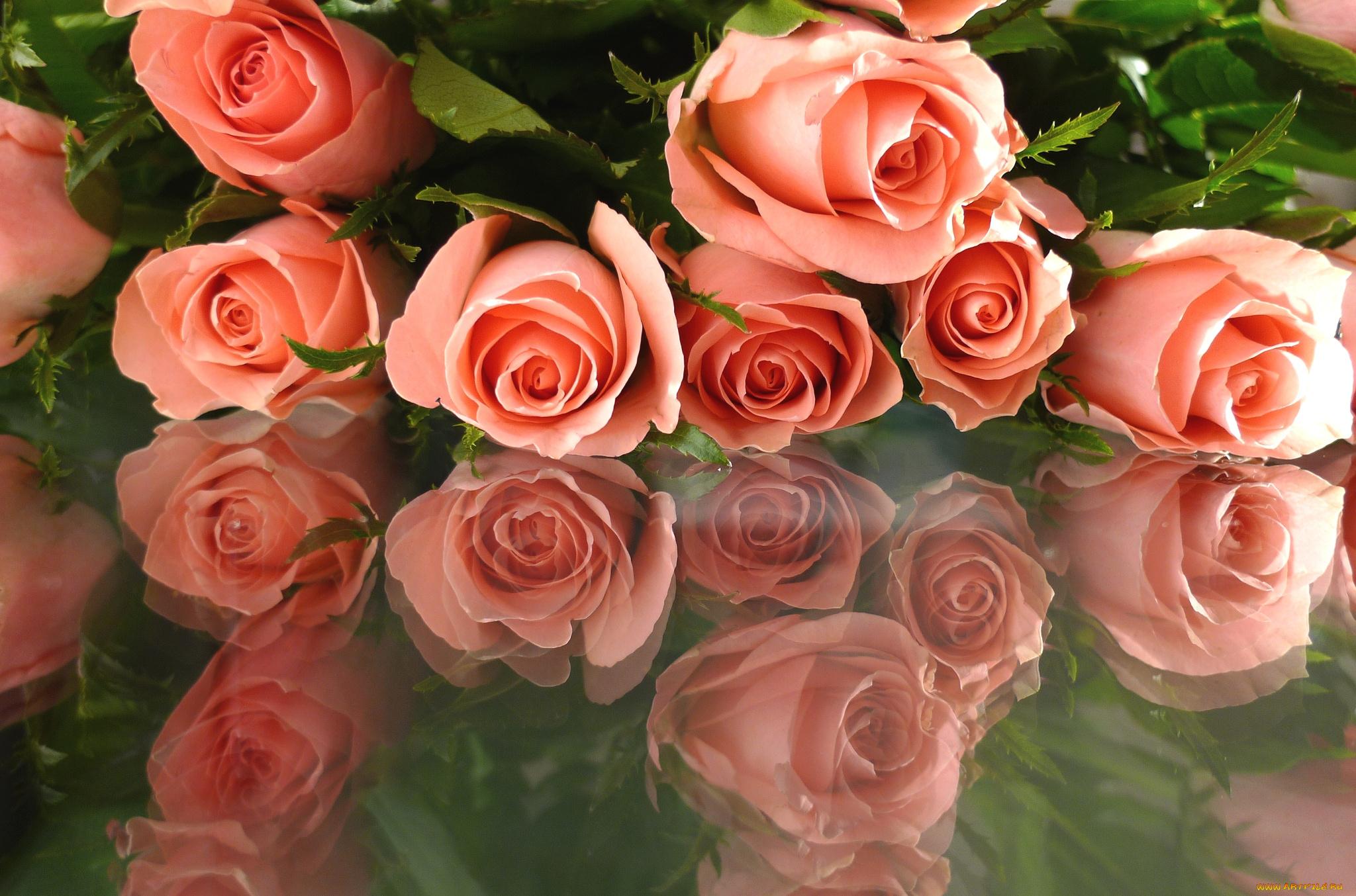Розы живая открытка