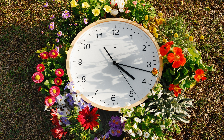 природа цветы часы  № 1520719 без смс