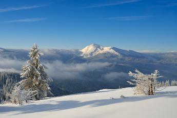 Картинка природа горы снег лес
