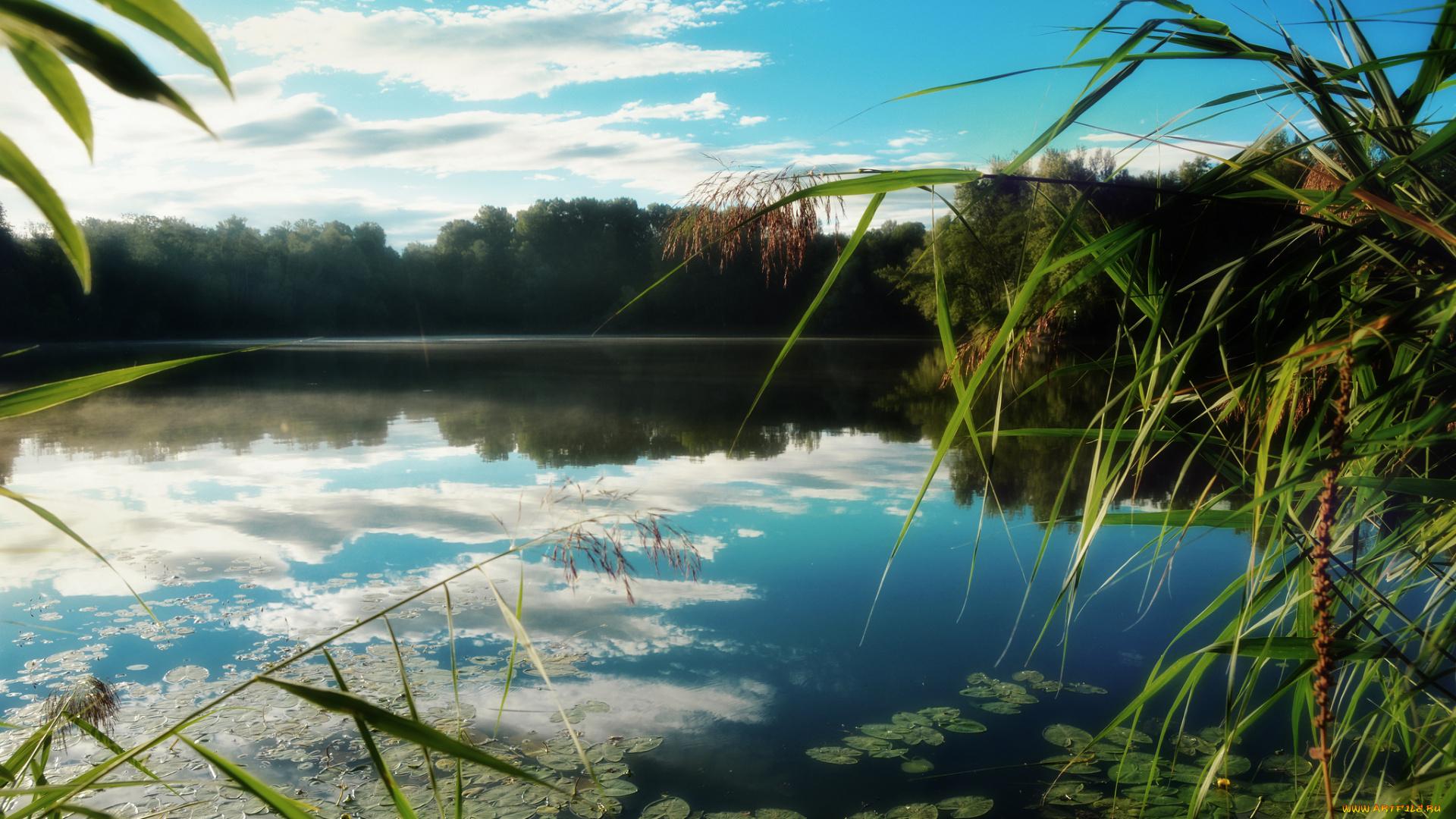 река с камышами картинки этого зачастую достаточно