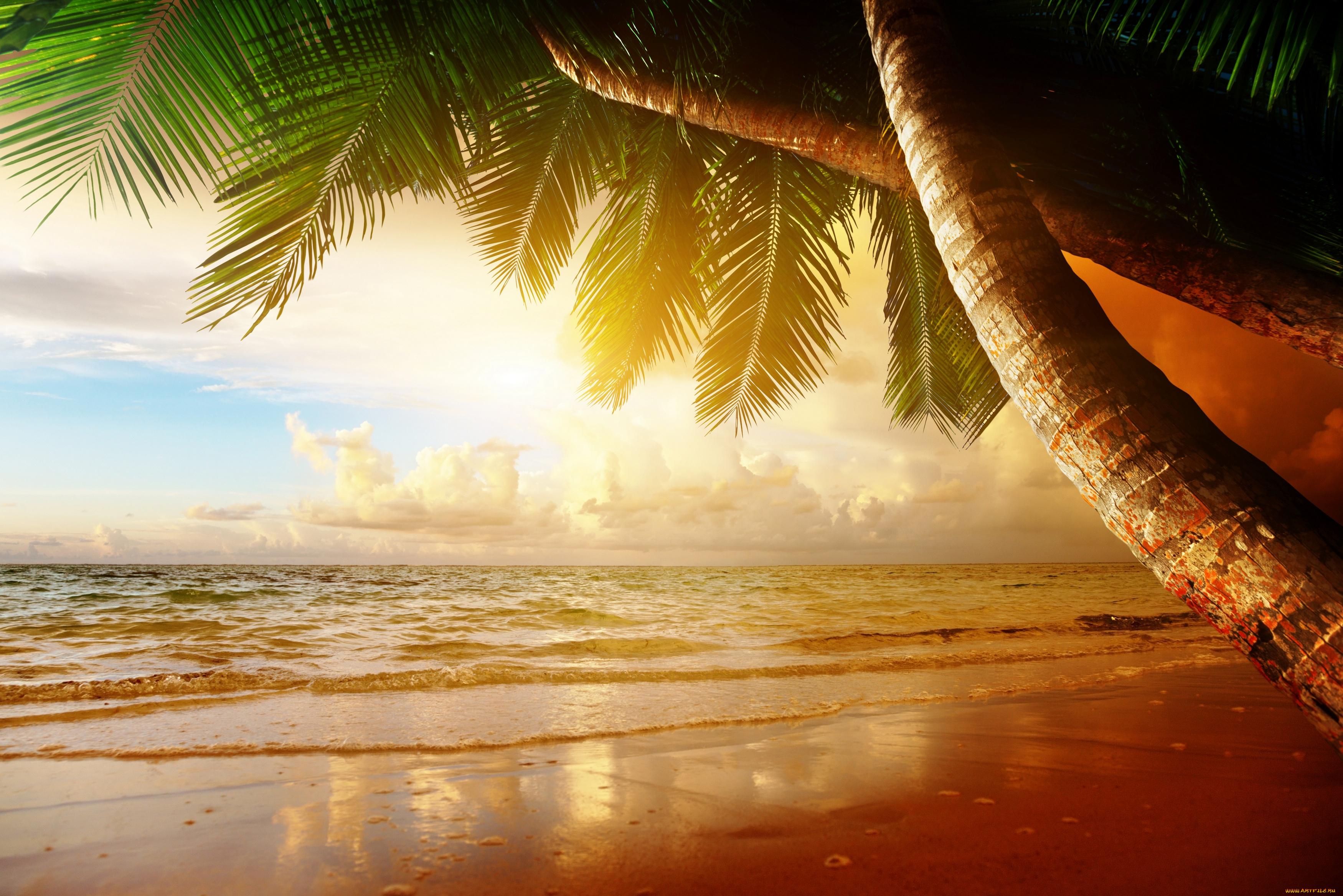 Открытки пляжа и моря, земля гифы смешные