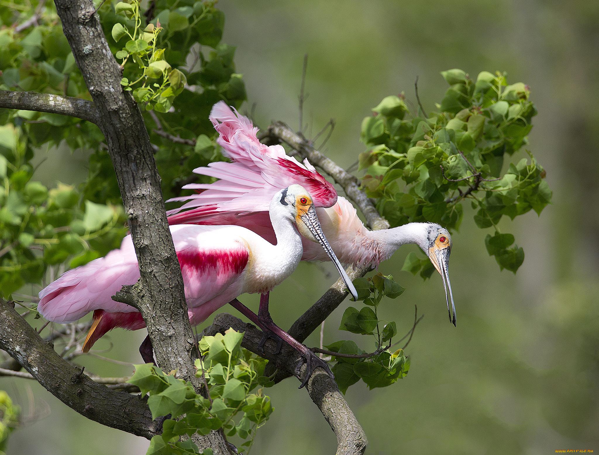Прикольные птицы видео, надписью