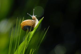 Картинка животные улитки улитка трава природа