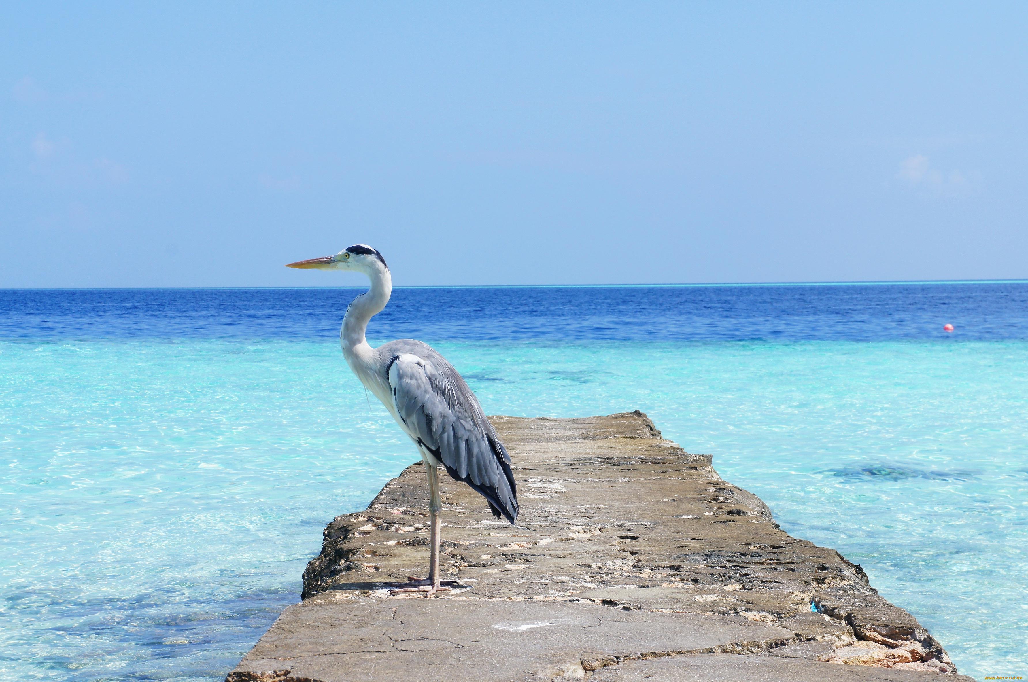 Белая птица на берегу бесплатно