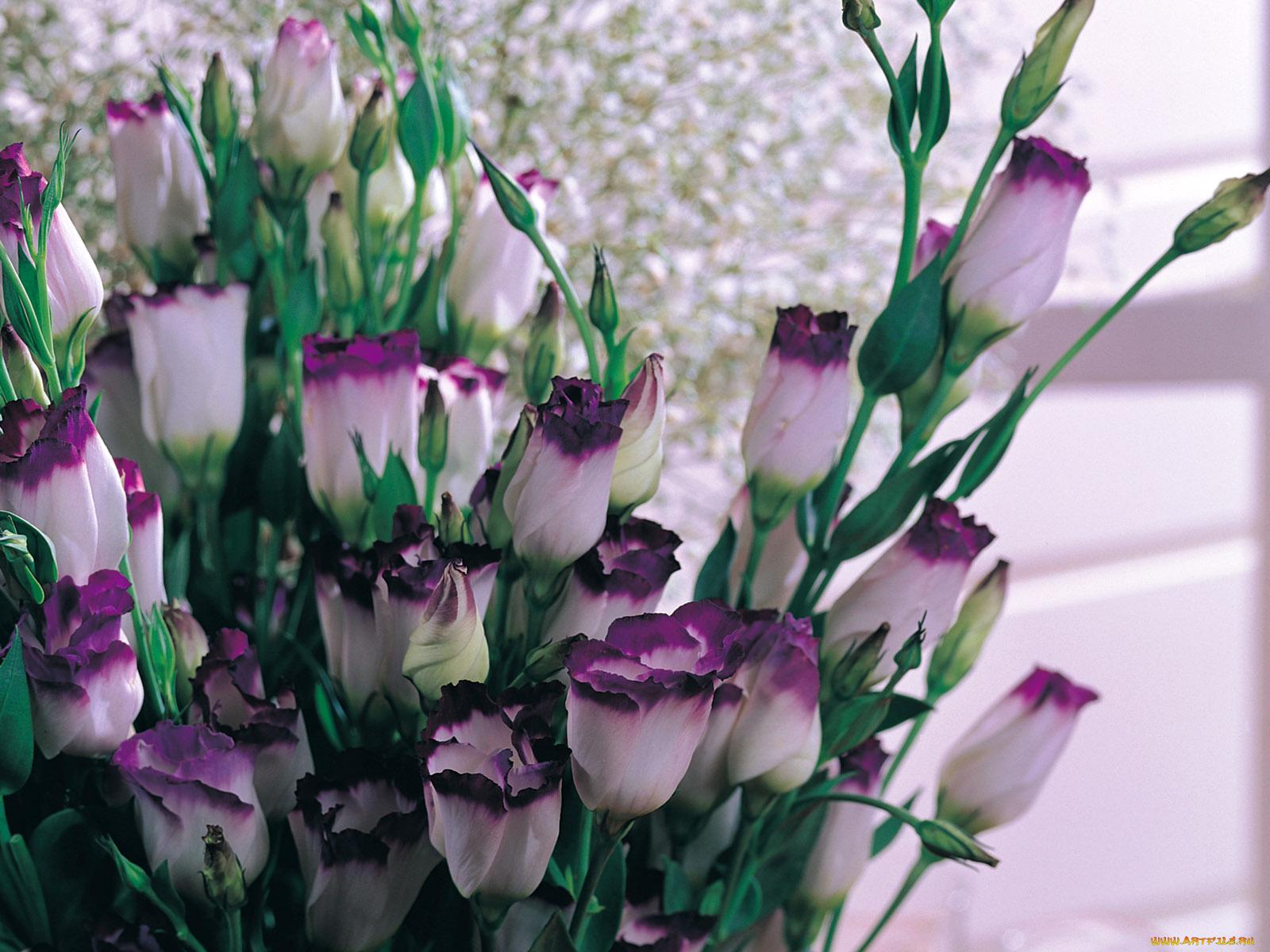 Цветы для букеты как выглядят и их названия, цветов кишиневу домой